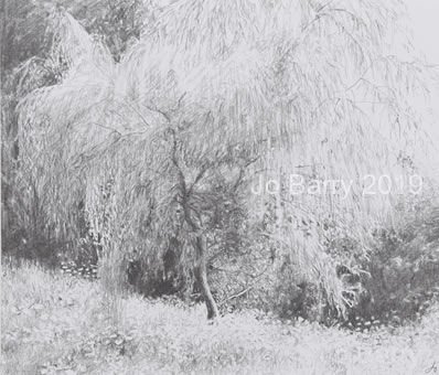 The willow tree - Pencil Drawing - 18 x 24.5cm