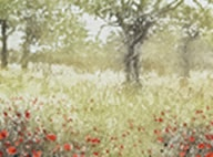 Image of poppies and trees